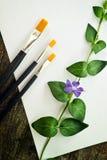 Verfborstels, bloem en Witboek Stock Afbeelding
