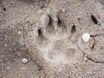 Verfolgen Sie Abdrücke im Sand auf Strand am sonnigen Tag Detail im Sand Lizenzfreie Stockfotografie