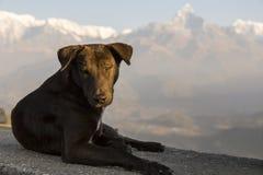 Verfolgen Sie auf Steinleiste am frühen Morgen sich sonnen an Sarangkot-Gesichtspunkt lizenzfreies stockfoto