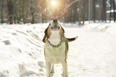 Verfolgen Sie das Abstreifen im Schnee unter der Sonne Stockbild