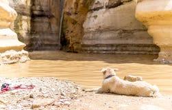 Verfolgen Sie das Anstarren an einem Wasserfall in der Wüste stockbild