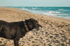 Verfolgen Sie das Betrachten des Meeres auf dem Strand Lizenzfreie Stockfotografie