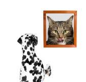 Verfolgen Sie das Betrachten des Porträts der Katze Lizenzfreie Stockbilder