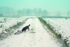 Verfolgen Sie das Gehen auf das Feld kauerte mit Schnee Lizenzfreies Stockfoto