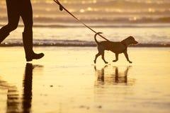 Verfolgen Sie das Gehen auf eine Leine auf dem Strand bei Sonnenuntergang Stockbild