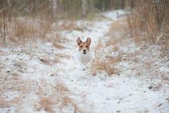 Verfolgen Sie das Gehen am Winterwald, der durch Schneeweg läuft Stockbild