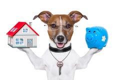 Fahnenhund lizenzfreies stockfoto