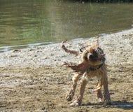Verfolgen Sie das Rütteln trocken auf Strand neben BRITISCHEM Fluss lizenzfreies stockbild