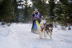Verfolgen Sie das Rodeln mit Schlittenhund auf internationalem Hundeschlittenwettbewerb Lizenzfreie Stockfotografie