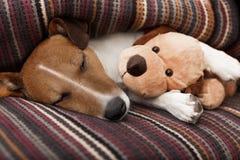 Verfolgen Sie das Schlafen Stockfoto