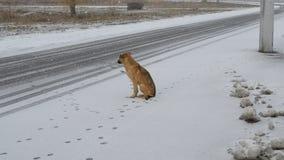 Verfolgen Sie das Sitzen durch die Seite der Straße im Schnee stock video footage