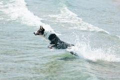 Verfolgen Sie das Springen in das Meer Lizenzfreie Stockbilder