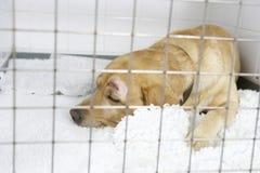 Verfolgen Sie das Wieder.herstellen in den Hundehütten des Tierarztes Stockfotografie
