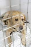 Verfolgen Sie das Wieder.herstellen in den Hundehütten des Tierarztes Lizenzfreie Stockfotos