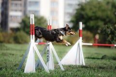 Verfolgen Sie die Überwindung über einem Sprung an einem Beweglichkeitsereignis Stockfoto