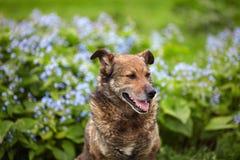 Verfolgen Sie die Aufstellung auf einem Hintergrund von blauen Blumen Lizenzfreie Stockbilder