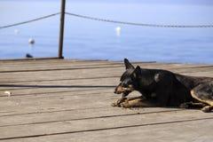 Verfolgen Sie die Fütterung auf einen Pier auf See Ohrid Stockfoto
