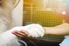 Verfolgen Sie die Hand, die mit Menschen - Freundschaft und Haustiertrainingskonzept rüttelt stockbild