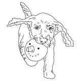 Verfolgen Sie Farbton, Schwarzweiss-Zeichnung, der Hund trägt einen Schneemann ` s Kopf Stockfoto