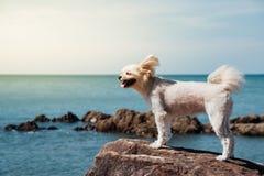 Verfolgen Sie glücklichen Spaß auf felsigem Strand wenn Reise in Meer stockfotos