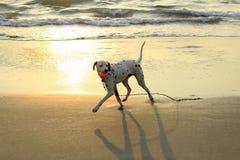Verfolgen Sie Spiele mit einem Ball am Strand stockfotografie