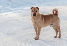 Verfolgen Sie Stellung auf dem Schnee und die Kamera betrachten lizenzfreie stockbilder