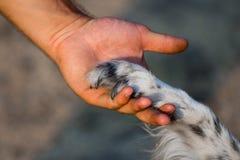 Verfolgen Sie Tatze und menschliche Hand Stockfotografie