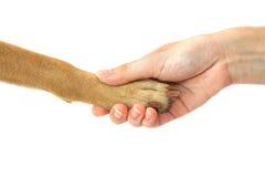 Verfolgen Sie Tatze und menschlichen Handhändedruck, Freundschaft Lizenzfreie Stockfotos