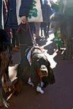 Verfolgen Sie und sein Eigentümer an der St- Patrick` s Tagesfeier in Moskau Lizenzfreie Stockfotografie