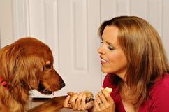 Verfolgen Sie unterrichtenden Hund der Trainingsfrau, um Hände zu rütteln Lizenzfreie Stockfotografie