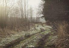 Spur von Autos im Wald lizenzfreie stockfotografie