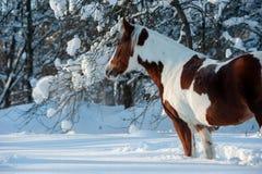 Verfpaard het stellen in sneeuwomgeving stock fotografie