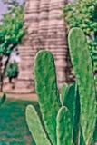 Verfraai cactus stock foto