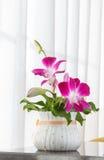 Verfraai van orchideebloemen Stock Foto