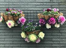 Verfraaide hangende bloempot van sierkool en viooltje stock foto