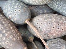 Verfraaide kalebasboom-als vruchten Stock Afbeeldingen