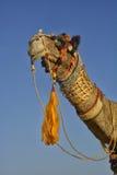 Verfraaide kameel Rajasthan Stock Afbeeldingen