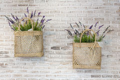 Verfraaide Lavendel stock afbeeldingen