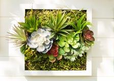 Verfraaide muur verticale tuin, Achtergrond stock fotografie