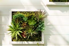 Verfraaide muur verticale tuin, Achtergrond stock foto's