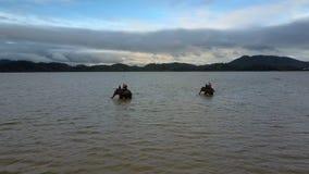 Verfraaide Olifanten met Toeristen op Hoogste Was in Meer stock footage