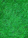 Verfris me aan groen gras Royalty-vrije Stock Fotografie