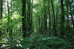 Verfrissen zich koel in het de zomerhout stock fotografie