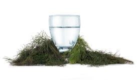 Verfrissende water en kruiden Stock Foto's