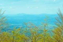 Vergankelijk beukbos in de lente, boslandschap royalty-vrije stock afbeeldingen