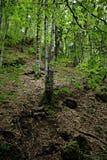 Vergankelijk bos stock foto's