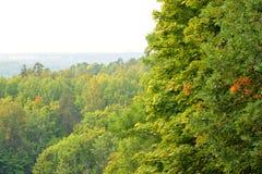 Vergankelijk bos bij de zomer stock afbeeldingen