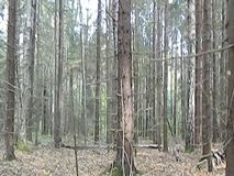 Vergankelijk bos in Centraal Rusland stock videobeelden