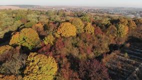 Vergankelijk Forest Around een Verlaten Vesting stock footage