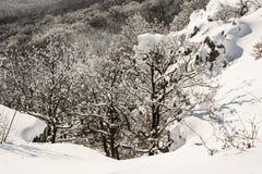 Vergankelijk wit bos in de winter, natuurlijke scène Stock Afbeelding